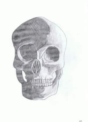 Anatomie//.. Schädel