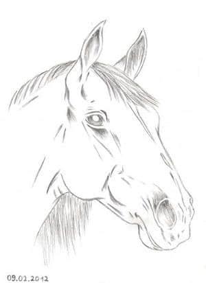 Pferd aus dem Kunstunterricht