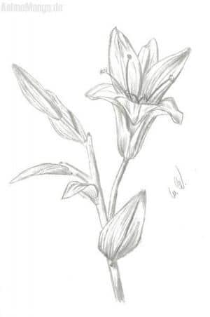 Ne Blume?
