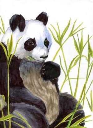 Pandabäääär X333